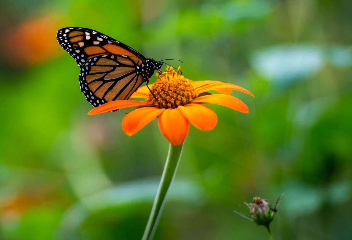 Butterfly: A Symbol Of Transformation