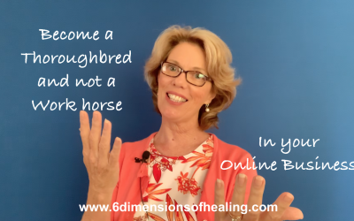 A Metaphor for Business – It's Horses for Courses